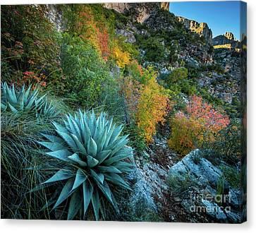 Autumn Century Plants Canvas Print