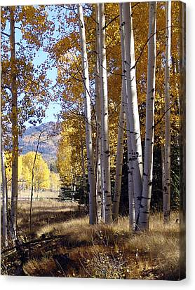 Autumn Chama New Mexico Canvas Print by Kurt Van Wagner