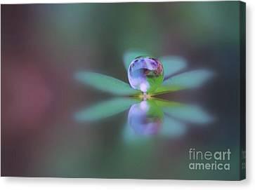 Autumn Clover Droplet Canvas Print by Kym Clarke
