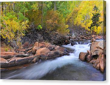 Canvas Print featuring the photograph Autumn Color In Bishop by Dung Ma