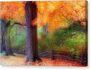 Autumn Color Maple Trees By Fence Line Canvas Print by Panoramic Images