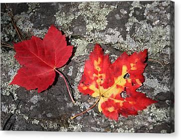 Autumn Colors Canvas Print by Kate  Leikin