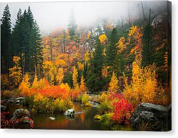 Canvas Print featuring the photograph Autumn Colors Symphony by Dan Mihai