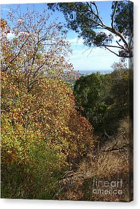 Autumn Colours - Adelaide Hills Canvas Print by Phil Banks