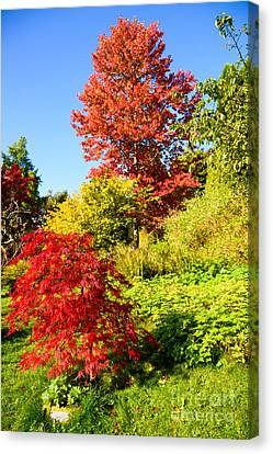 Canvas Print featuring the photograph Autumn Colours by Colin Rayner