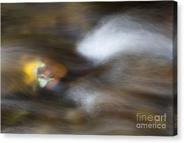 Autumn Concealed Canvas Print by Mike Dawson