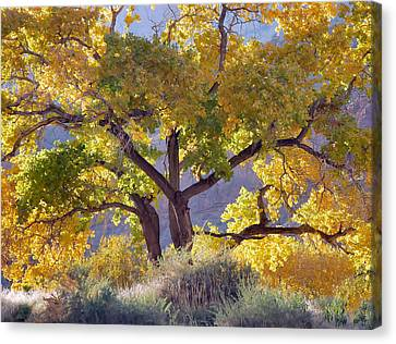 Autumn Cottonwood - Zion Canvas Print
