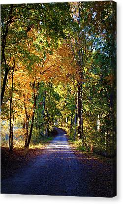 Autumn Country Lane II Canvas Print by Cricket Hackmann