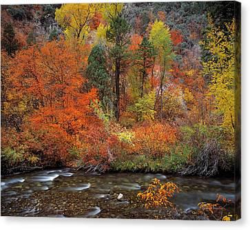 Beautiful Creek Canvas Print - Autumn Creek by Leland D Howard