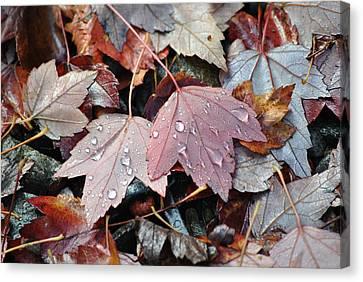 Autumn Cries Canvas Print