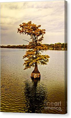 Autumn Cypress Canvas Print by Scott Pellegrin