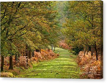 Autumn Dames New Forest Canvas Print by Richard Thomas