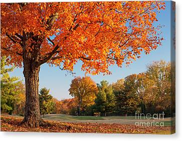 Autumn Dawn Canvas Print by Brian Jannsen
