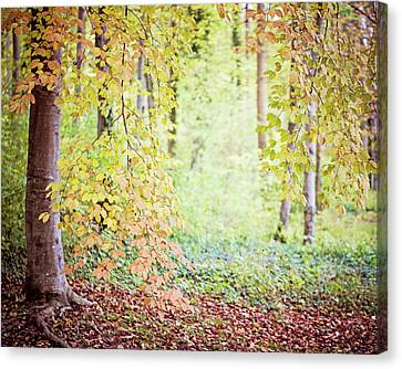 Autumn Dreams Canvas Print by Melanie Alexandra Price