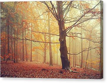 Autumn Dreams Of Oak Tree 1 Canvas Print by Jenny Rainbow