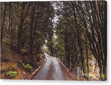 Autumn Drive On Pristine Cradle Mountain Road Canvas Print by Jorgo Photography - Wall Art Gallery