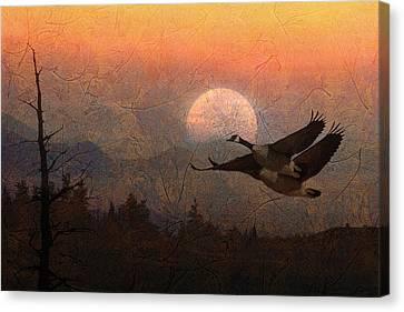 Autumn Canvas Print by Ed Hall