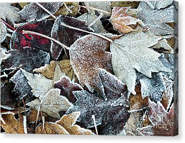 Canvas Print featuring the photograph Autumn Ends, Winter Begins 1 by Linda Lees