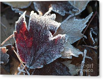 Canvas Print featuring the photograph Autumn Ends, Winter Begins 2 by Linda Lees