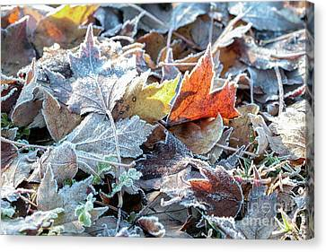 Canvas Print featuring the photograph Autumn Ends, Winter Begins 3 by Linda Lees