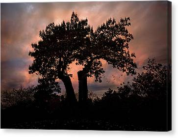 Canvas Print featuring the photograph Autumn Evening Sunset Silhouette by Chris Lord