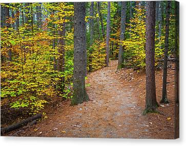 Canvas Print featuring the photograph Autumn Fall Foliage In New England by Ranjay Mitra