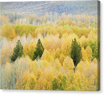 Canvas Print - Autumn Fall Foliage by Sheri Van Wert
