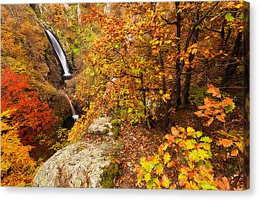 Autumn Falls Canvas Print by Evgeni Dinev