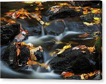 Canvas Print featuring the photograph Autumn Farewell by Juergen Roth