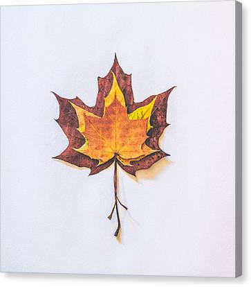 Red Leaf Canvas Print - Autumn Fire by Kate Morton