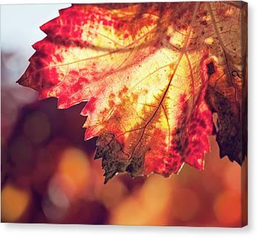 Autumn Fire Canvas Print by Melanie Alexandra Price