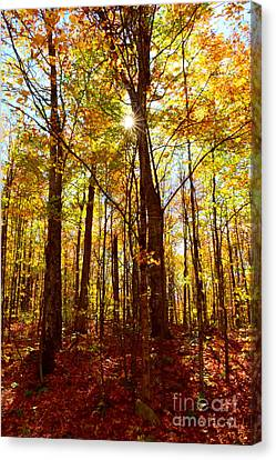 Canvas Print - Autumn Flare by Catherine Reusch Daley