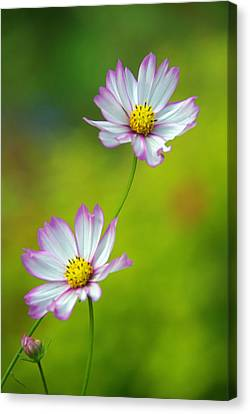 Canvas Print featuring the photograph Autumn Flowers by Byron Varvarigos