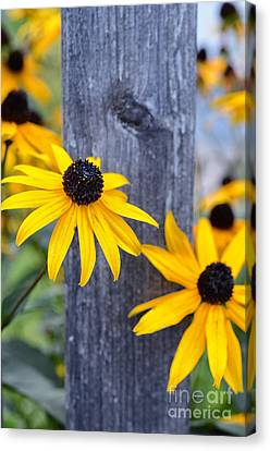 Autumn Flowers Yellow Canvas Print