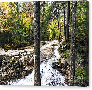 Canvas Print featuring the photograph Autumn Flows by Anthony Baatz