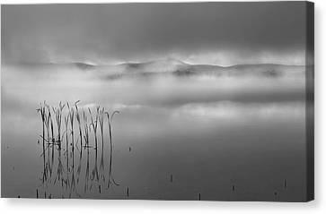 Autumn Fog Black And White Canvas Print