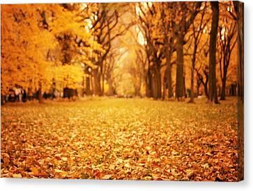 Autumn Foliage - Central Park - New York City Canvas Print by Vivienne Gucwa