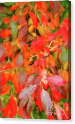 Autumn Foliage Canvas Print by Gaspar Avila