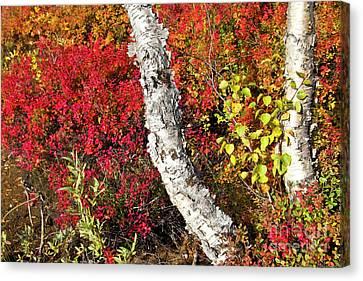 Autumn Foliage In Finland Canvas Print by Heiko Koehrer-Wagner