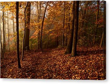 Autumn Forest Canvas Print by Ann Bridges