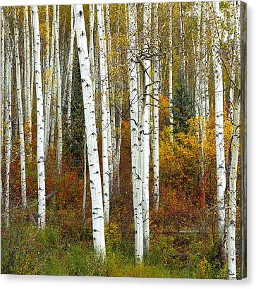 Autumn Forest Beauty Canvas Print by Tim Reaves