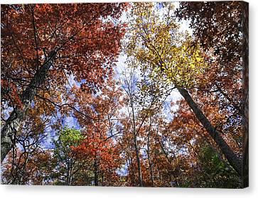 Autumn Forest Canopy Canvas Print by Lynn Bauer
