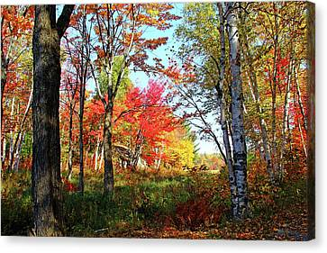 Canvas Print featuring the photograph Autumn Forest by Debbie Oppermann