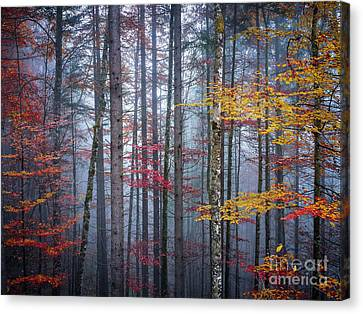 Autumn Forest In Fog Canvas Print by Elena Elisseeva