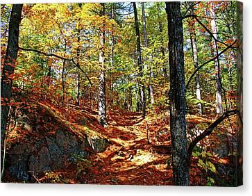 Autumn Forest Killarney Canvas Print