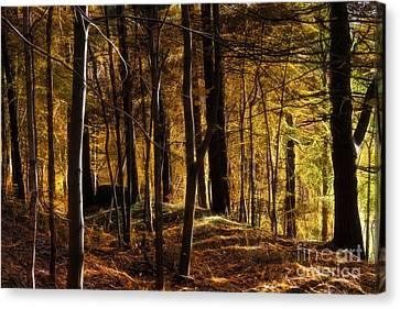 Autumn Forest Canvas Print by Lutz Baar
