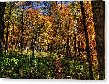 Autumn Forest Path At Johnson's Mound Canvas Print