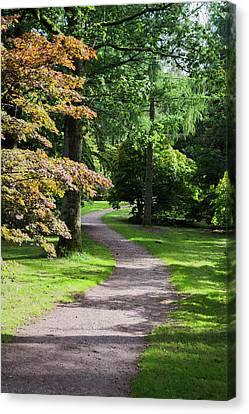Canvas Print featuring the photograph Autumn Forest Path by Scott Lyons