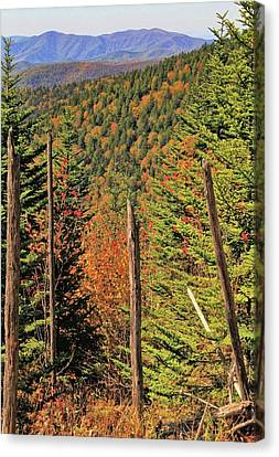 Autumn From The Top Of Clingman's Dome Canvas Print