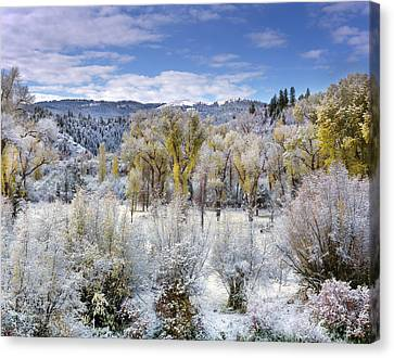 Autumn Frost And Texture Canvas Print by Leland D Howard